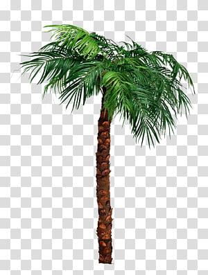 Arecaceae Tree , reggaeton PNG clipart
