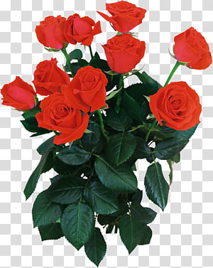 Garden roses Flower bouquet Moscow, rose PNG