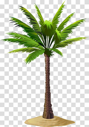 Asian palmyra palm Date palm Arecaceae , date palm PNG clipart