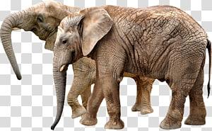Okapi African bush elephant Giraffe Centre Rhinoceros, elephant PNG