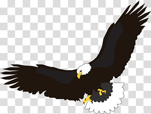 Flight Eagle , flying eagle , free PNG clipart