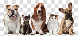 Cat Dog Puppy Kitten Pet, Cat PNG clipart