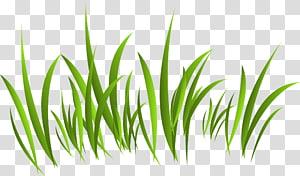 Europe Green, Green grass PNG clipart