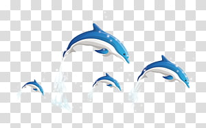 Dolphin , Dolphins PNG clipart