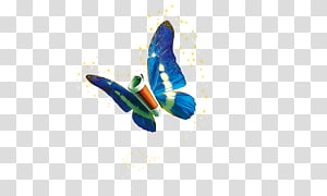 Information technology, butterfly PNG clipart