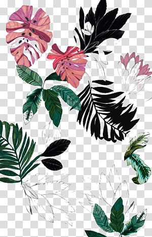 leaves , Flower Drawing , plant PNG clipart