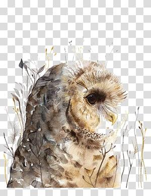 brown owl portrait , Owl Watercolor painting Art, Watercolor painted owl PNG