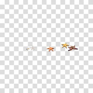 Area Pattern, starfish PNG clipart