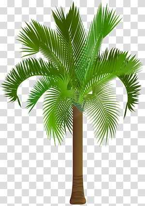 palm tree, Arecaceae Asian palmyra palm , Palm Tree PNG clipart