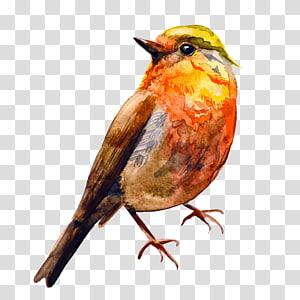 Bird Watercolor painting Drawing, Orange Bird PNG