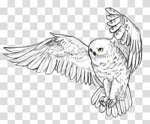 Snowy owl Beak Feather Bird, owl PNG