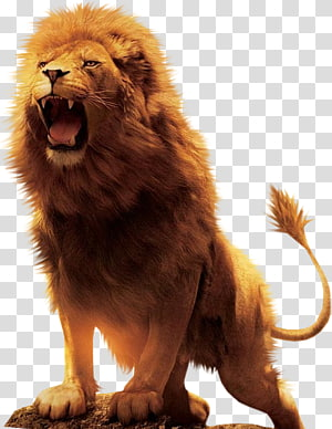 roaring lion illustration, Aslan Lion Desktop , lion PNG