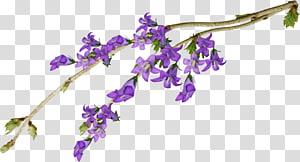 Cut flowers Violet Purple Mauve, flower PNG clipart