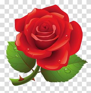 Rose , rose PNG