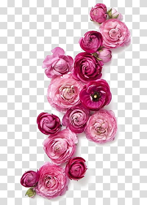 Flower Clothing Fashion Pink, Red Roses, red peony in bloom PNG