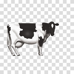 Dairy cattle Milk Ox, Dairy cow PNG