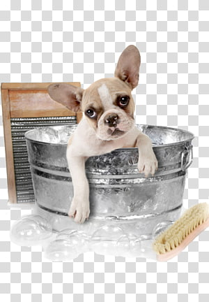 Pet sitting Dog grooming Cat Bathing, Cat PNG