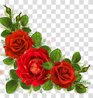 Garden roses Portable Network Graphics Flower, flower PNG clipart