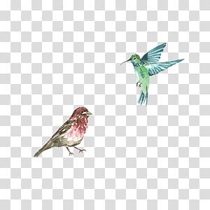 Hummingbird, Bird PNG