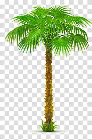 Arecaceae Tree , tree PNG clipart