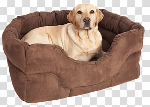 Dog grooming Puppy Bed Pet, fancy dog PNG