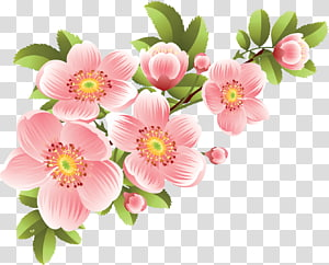 Flower Banner, Flowers PNG
