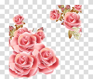 Flower Rose Pink , Rose Background, pink rose flower PNG