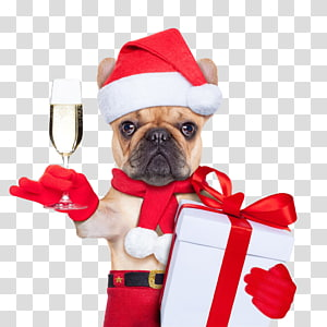 puppy santa claus PNG clipart