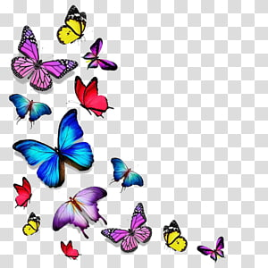 Butterfly Drawing, butterfly PNG clipart