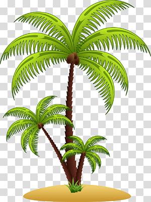 Arecaceae Euclidean , palm tree PNG clipart