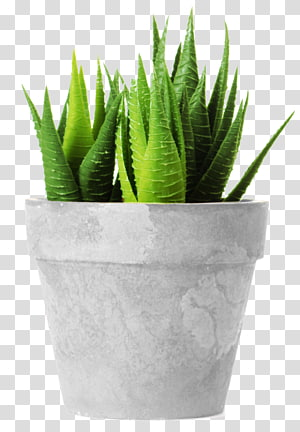 potted PNG