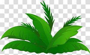 Arecaceae Date palm Tree , plants PNG clipart