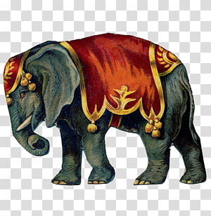 Asian elephant African elephant, Circus PNG
