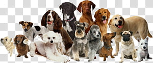 Dog daycare Dog grooming Cat Pet sitting, Dog PNG