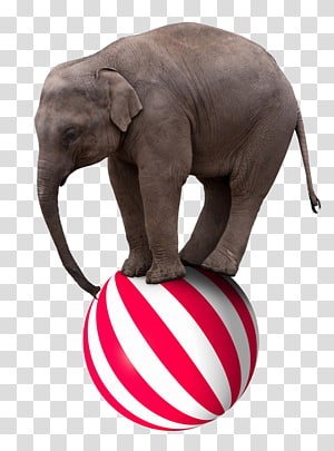 elephant balancing on ball, Elephant Circus , PPT creative circus elephant stepped on the ball PNG