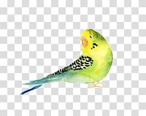Budgerigar Parrot Bird Watercolor painting, parrot PNG