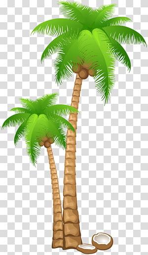 Coconut Arecaceae , palm leaf PNG clipart