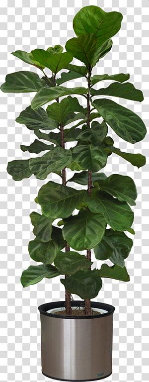 Houseplant Tree Shrub Furniture, plant PNG clipart