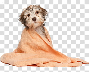 Dog grooming Pet Cat Dog bakery, Dog PNG