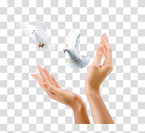 Advertising Gratis Icon, Pigeon gesture PNG