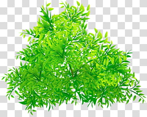 Green , Green tree PNG