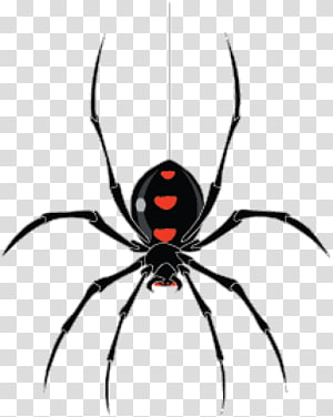 Spider , spider PNG clipart