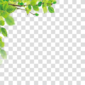 leaves border PNG