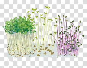 Vegetable Cartoon Illustration, Cartoon bean sprouts vegetables PNG clipart