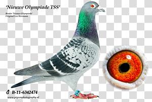 Columbidae Homing pigeon Pigeon racing Bird Arendonk, racing pigeon PNG clipart