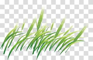 Barley Computer file, Green Barley PNG clipart