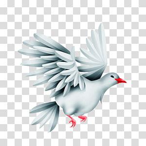 Bird Green pigeon Rock dove, pigeon PNG
