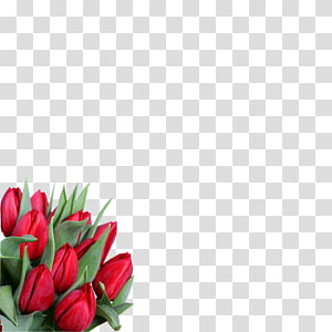 8 March International Women\'s Day Flower ZieduVeikals.lv Holiday, flower PNG clipart