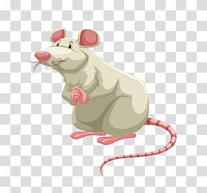 Mouse Rat , mouse PNG clipart