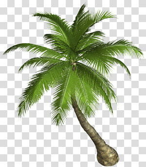 Arecaceae Tree Coconut , palm leaves PNG clipart